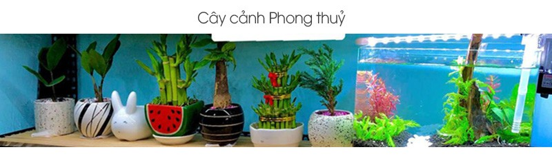cay-canh-phong-thuy